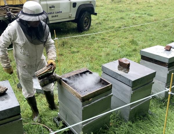 Agriculture : une année noire pour les apiculteurs